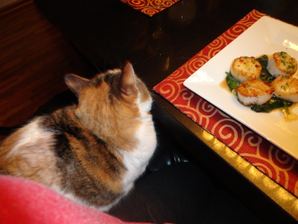 Charlotte trying to snipe my dinner - but a great shot of the scallops in the top right corner!